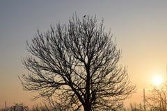 L'aube le soleil les arbres Images libres de droits