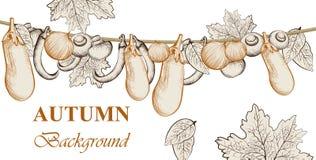 L'aubergine de récolte d'Atumn, les tomates et les légumes d'oignon dirigent le fond Style graphique tiré par la main de schéma Image libre de droits