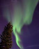 L'aurora boreale e l'albero Fotografie Stock Libere da Diritti