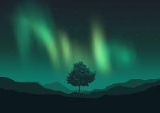 L'aurore Borealis au-dessus d'un arbre Photographie stock