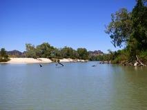 L'Australia, fiume dell'alligatore Immagini Stock
