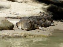 L'Australia, fiume dell'alligatore, kakadu Immagini Stock