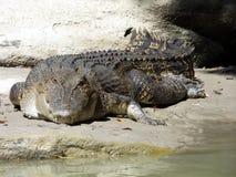 L'Australia, fiume dell'alligatore, kakadu Immagine Stock Libera da Diritti