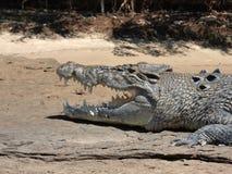 L'Australia, fiume dell'alligatore, kakadu Fotografie Stock