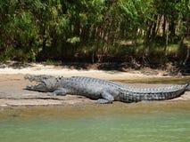 L'Australia, fiume dell'alligatore, kakadu Fotografia Stock