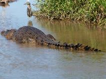 L'Australia, fiume dell'alligatore, parco nazionale di kakadu Fotografia Stock