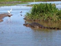 L'Australia, fiume dell'alligatore, parco nazionale di kakadu Immagine Stock