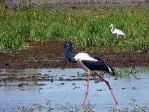 L'Australia, fiume dell'alligatore, parco nazionale di kakadu Fotografie Stock