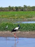 L'Australia, fiume dell'alligatore, parco nazionale di kakadu Fotografie Stock Libere da Diritti