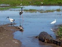 L'Australia, fiume dell'alligatore, parco nazionale di kakadu Fotografia Stock Libera da Diritti