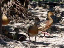 L'Australia, fiume dell'alligatore, parco nazionale di kakadu Immagine Stock Libera da Diritti
