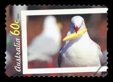 L'AUSTRALIA - francobollo fotografia stock libera da diritti