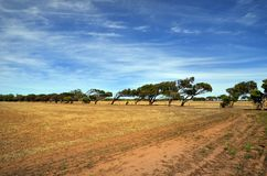 L'Australia, Australia occidentale, natura Immagine Stock