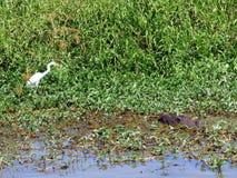 L'Australia, parco nazionale di Kakadu, fiume dell'alligatore Immagini Stock