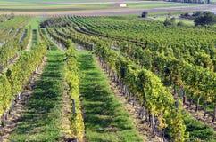 L'Austria, agricoltura Immagine Stock