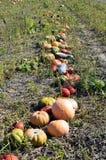 L'Austria, agricoltura Fotografie Stock Libere da Diritti