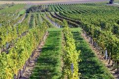 L'Austria, agricoltura Fotografie Stock
