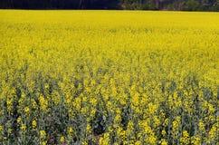 L'Austria, agricoltura, campo Immagini Stock