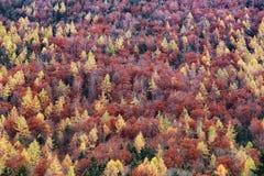 L'Austria: Colori di autunno Fotografia Stock Libera da Diritti