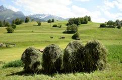 L'Austria, Tirolo, agricoltura Immagine Stock