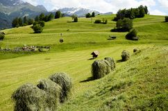 L'Austria, Tirolo, agricoltura Fotografia Stock