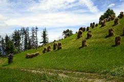 L'Austria, Tirolo, agricoltura Fotografia Stock Libera da Diritti