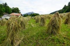 L'Austria, Tirolo, agricoltura Immagini Stock