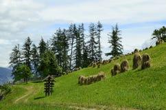 L'Austria, Tirolo, agricoltura Immagini Stock Libere da Diritti