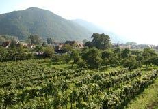 L'Austria | Wachau Immagini Stock Libere da Diritti
