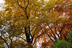L'automne Photographie stock