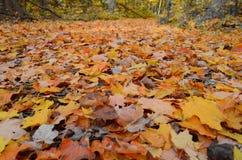 L'automne Photos stock