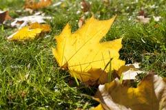 L'automne Images stock