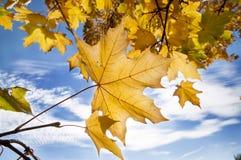 L'automne Photographie stock libre de droits