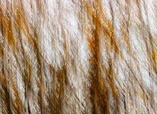 L'automne abstrait colore Autumn Trees Diagonal Lines Motion Image libre de droits