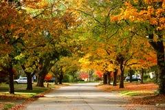 L'automne assaisonne la beauté colorée Photographie stock