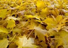 L'automne (automne) part dans le stationnement de Rosenstein, Stuttgart Image stock