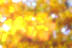 L'automne a brouillé le fond des arbres et des feuilles de jaune images libres de droits