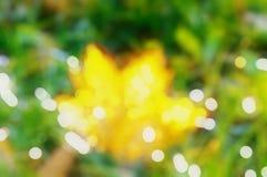 L'automne a brouillé le fond du bokeh jaune d'herbe de feuille photographie stock