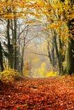 L'automne, chemin forestier de chute du rouge part vers la lumière Photographie stock libre de droits