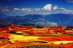 L'automne coloré classé Photos stock