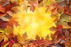 L'automne coloré d'arbre d'érable laisse la frontière avec Bokeh Photo libre de droits