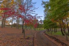 L'automne a coloré des feuilles Photographie stock