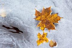 L'automne a coloré des feuilles d'érable dans l'eau Images libres de droits