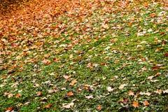 L'automne a coloré des feuilles dans Teplice, République Tchèque Images stock