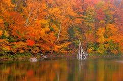 L'automne a coloré des feuilles de chute reflétées dans l'étang de castor Photos stock
