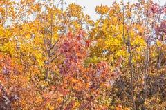 l'automne a coloré des feuilles sur les buissons Photo stock