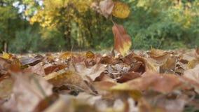 L'automne a coloré des feuilles tombant dans le mouvement lent clips vidéos