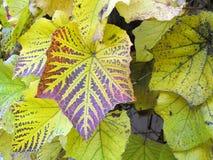 L'automne a coloré des lames. Image stock