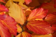 L'automne a coloré des lames Images stock