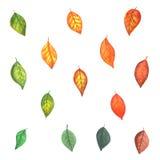 L'automne a coloré des lames Photos libres de droits